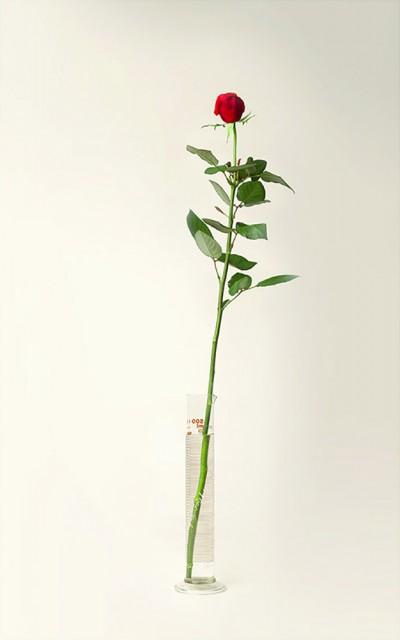a-dozen-roses12