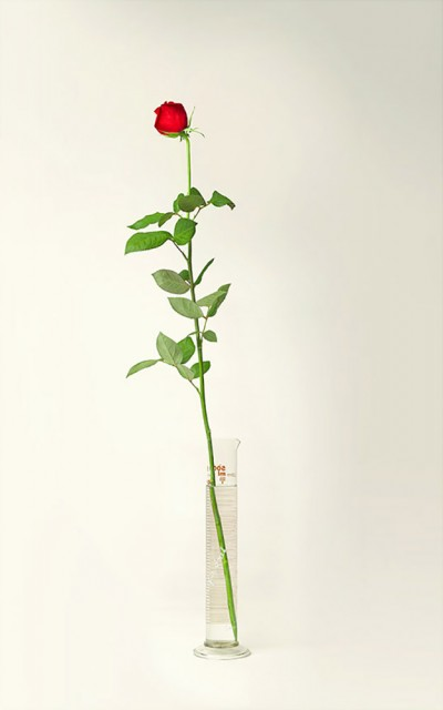a-dozen-roses7